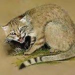 Le chat domestique des origines à nos jours